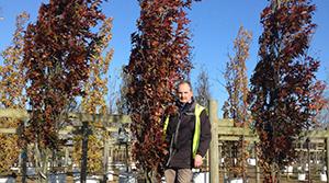 Visit Barcham Trees